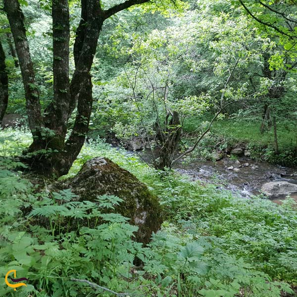 تصویری از پارک جنگلی مکیدی