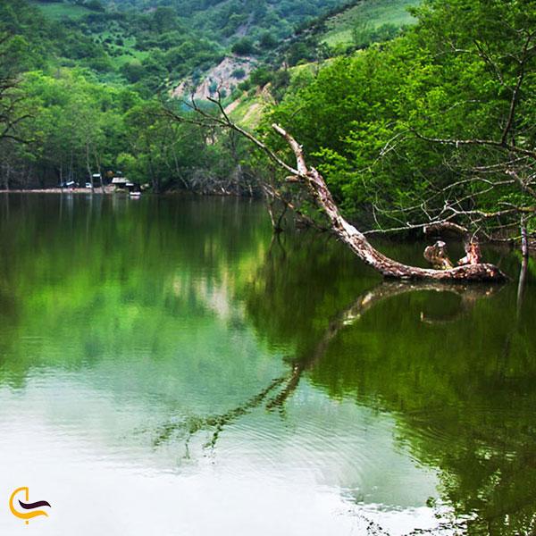 تصویری از طبیعت سرسبز دریاچه شور مست