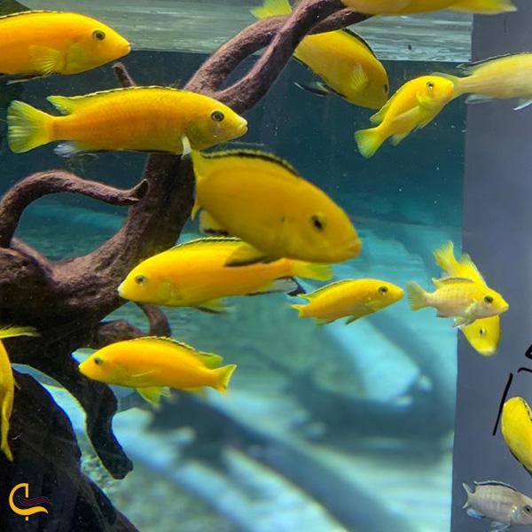 تصویری از ماهی های اکواریوم دبی