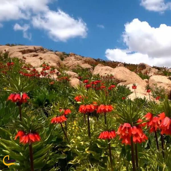 تصویری از طبیعت دشت گل لاله
