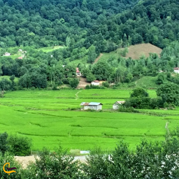 تصویری از روستای بداب