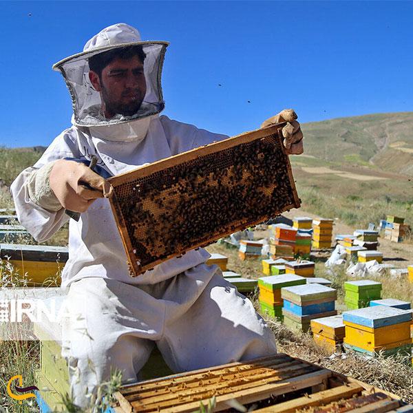عکس زنبورداری مردم بروجن