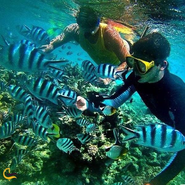 تصویری از ماهیهای باغچه مرجانی