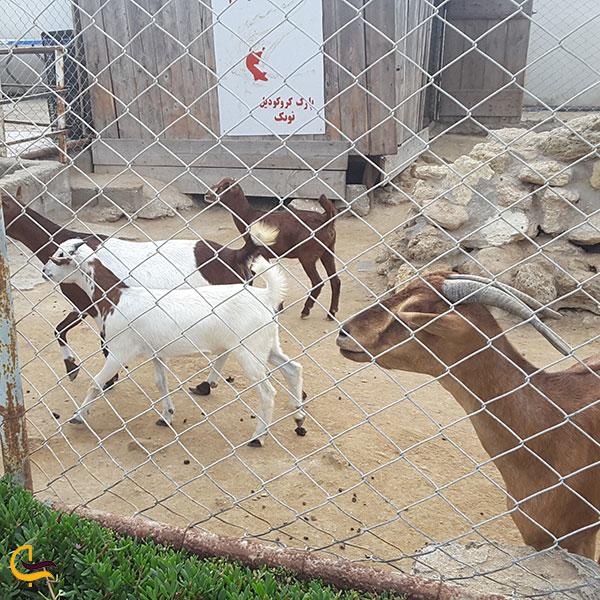 عکس خانه پستانداران پارک کروکودیل