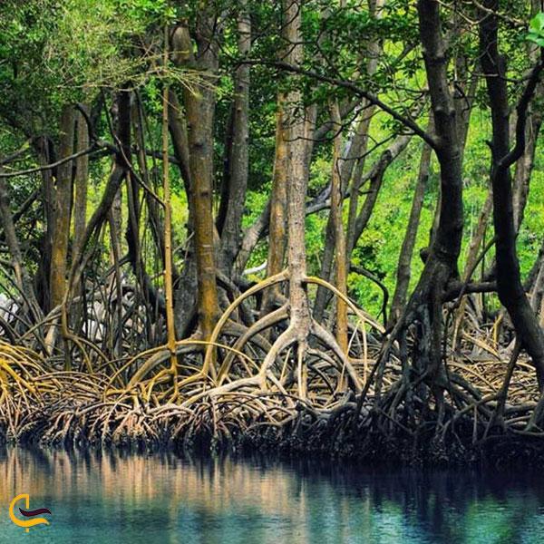 نمایی از جنگل حرا