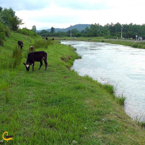 تصویری از روستای خرفکل