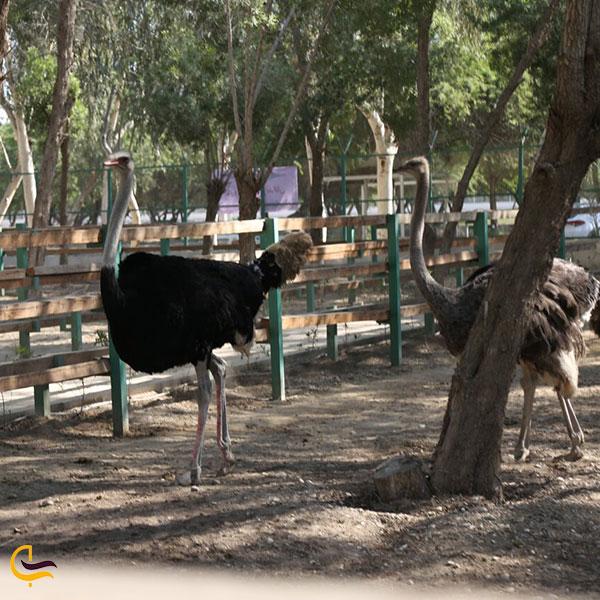 عکس شترمرغ باغ پرندگان