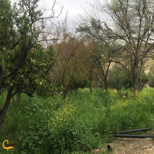 تصویری از درختان باغ