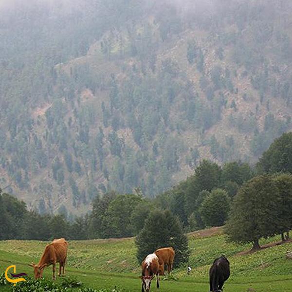 تصویری از منطقه حفاظت شده رودخان