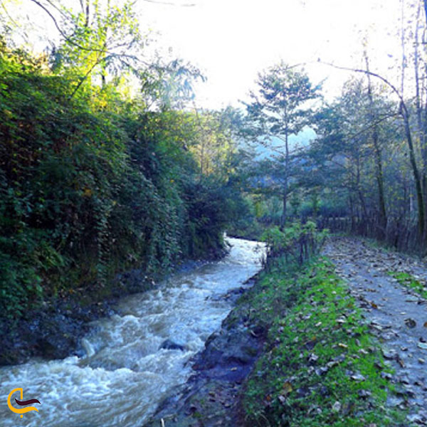 تصویری از رودخانه چنار رودخان