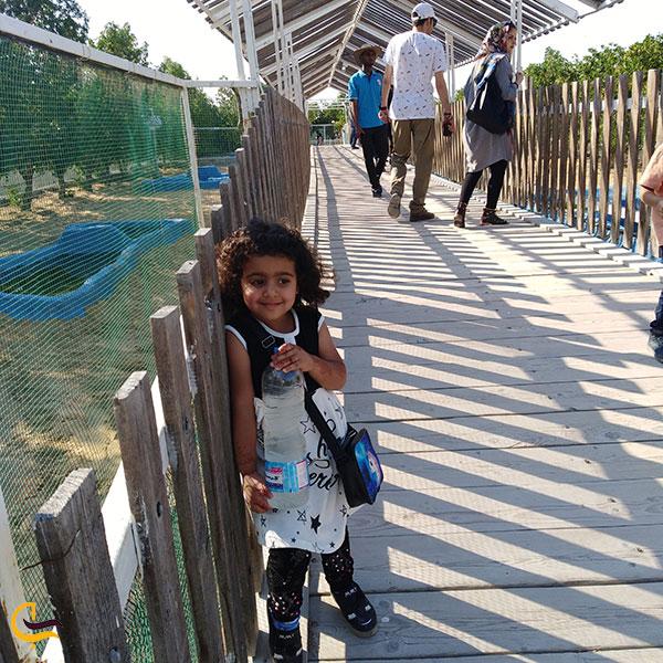 عکس تماشای حیوانات پارک کروکودیل