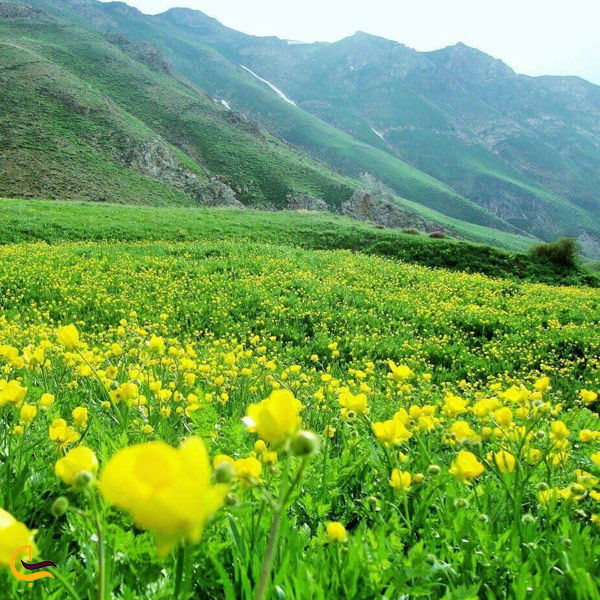 تصویری از طبیعت سرسبز اردبیل