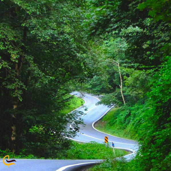 نمایی از از جاده سرسبز چالوس