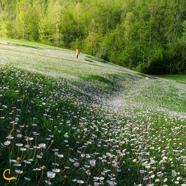 تصویری از طبیعت سرسبز رودبار