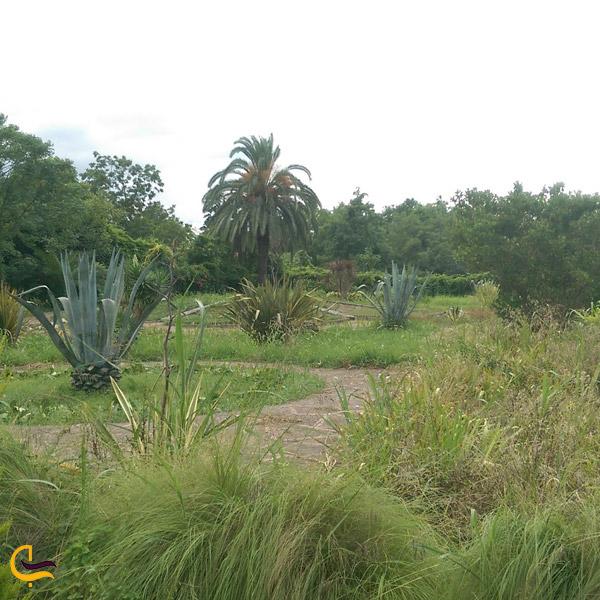 نمایی از گونههای گیاهی موجود در باغ