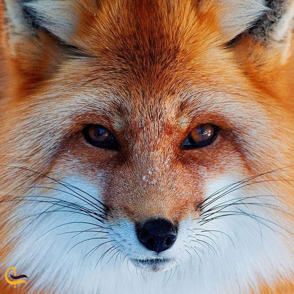 تصویری از جانوران در طبیعت سسلاقی داماش
