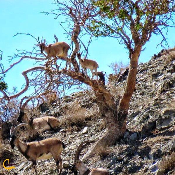 تصویری از پارک ملی بختگان