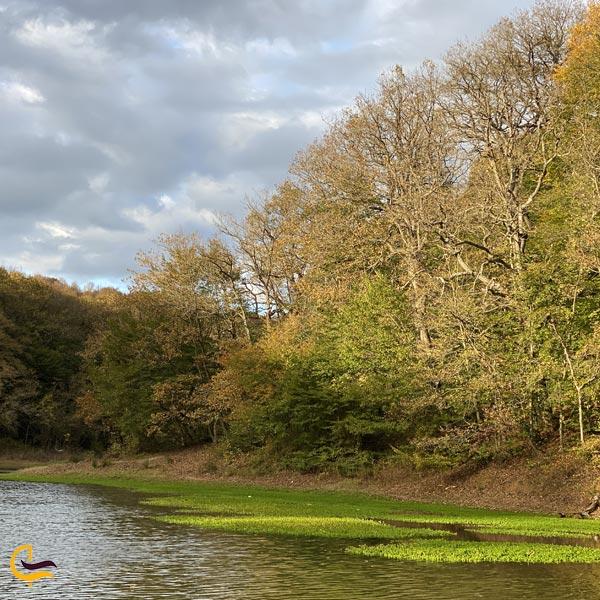 تصویری از جنگل بلگراد