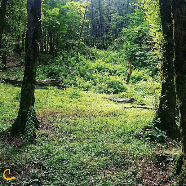 عکس پارک جنگلی دلند