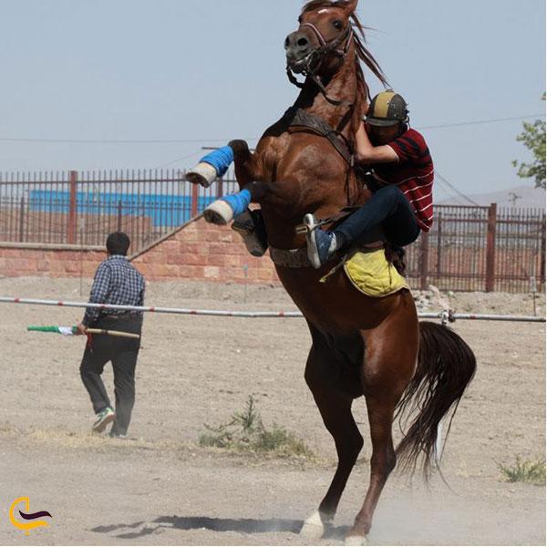 عکس اسب سواری نمک آبرود
