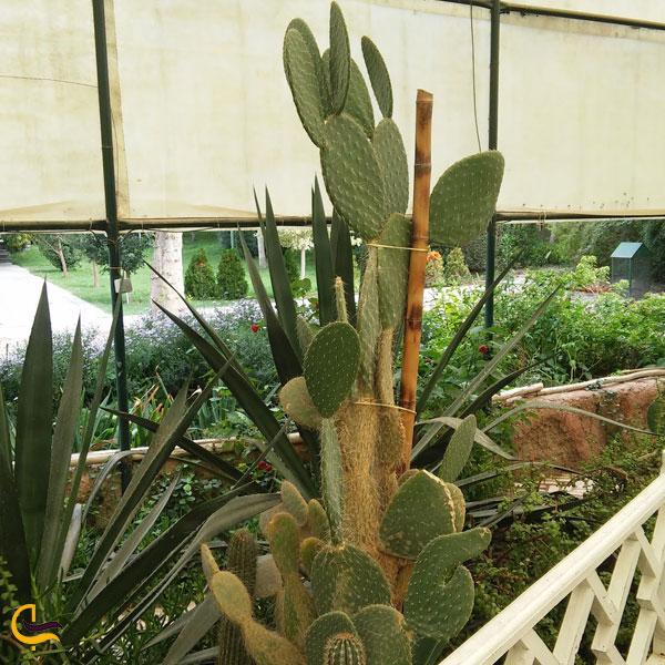 تصویری از گلخانهای مختص به انواع گیاهان کاکتوس