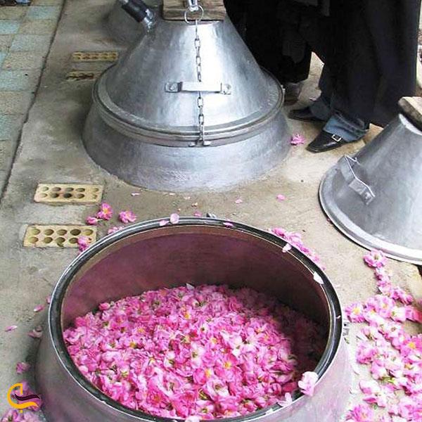 عکس جشنواره گلابگیری کاشان