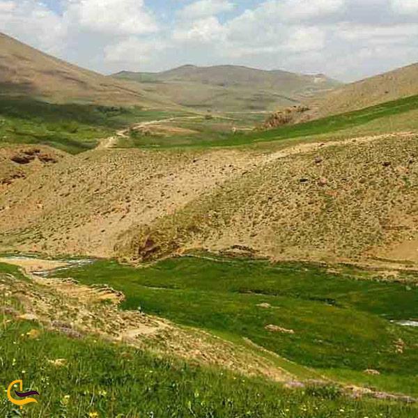 تصویری از پوشش گیاهی روستای لیقوان