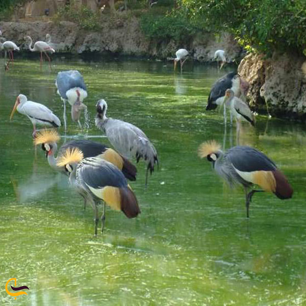 عکس باغ پرندگان کرج
