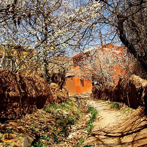تصویری از باغات روستای ابیانه