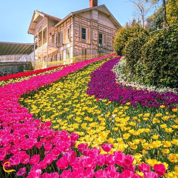 تصویری از پارک امیرگان