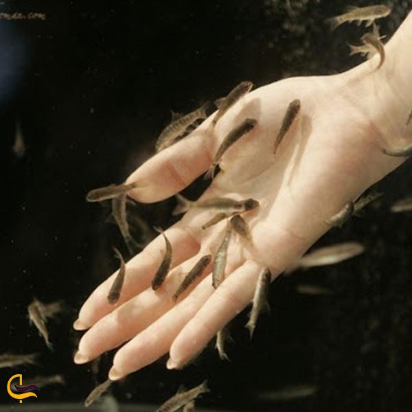 تصویری از ماهی دکتر فیش