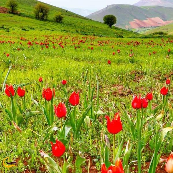 تصویری از روستای تاریخی ترجان
