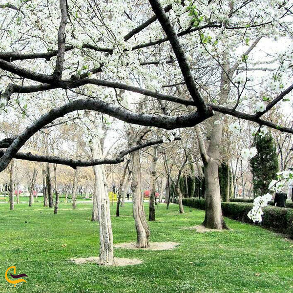 تصویری از طبیعت بهاری مشهد