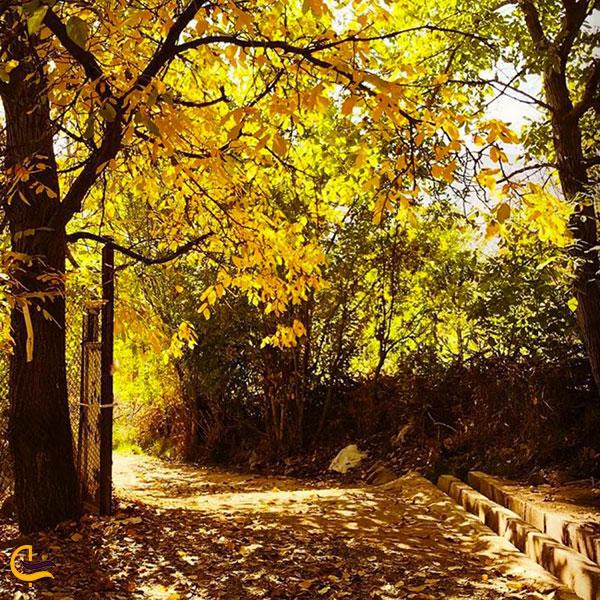 عکس فصل پاییز در امامه