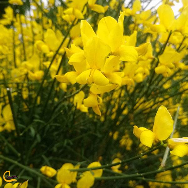 عکس گل های زیبا بوستان آزادگان