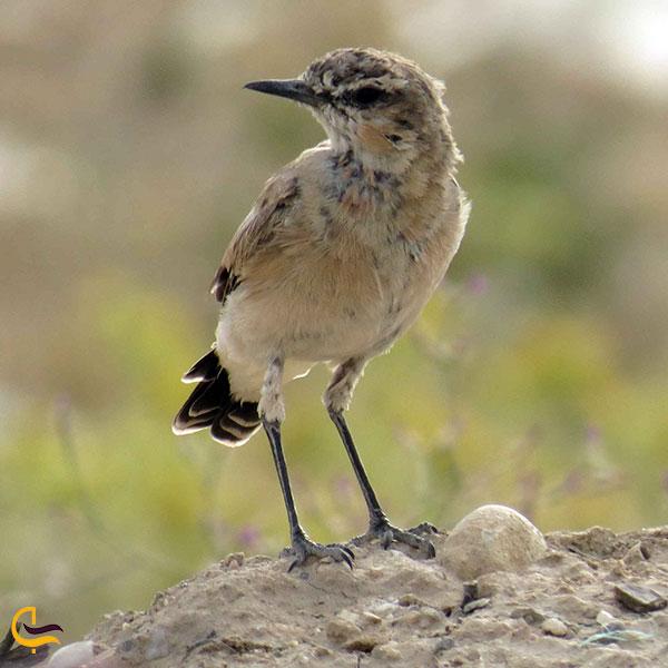 عکس پرندگان درروستای ایگل