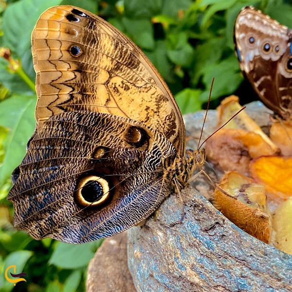 عکس پروانه ی باغ پروانه در ترکیه