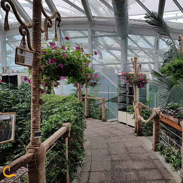 عکس گلخانه باغ گرمسیری پروانه