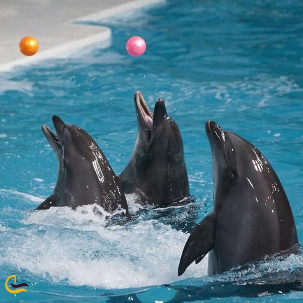 تصویری از پارک دلفین های کیش