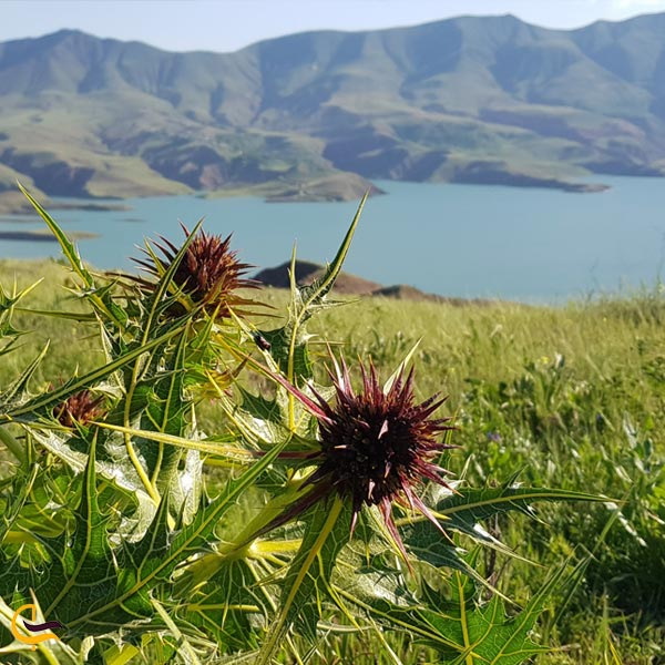 تصویری از پوشش گیاهی سد طالقان