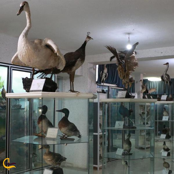 موزه تاریخ طبیعی کرمانشاه
