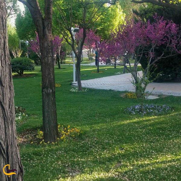 عکس درختچه های بوستان آزادگان
