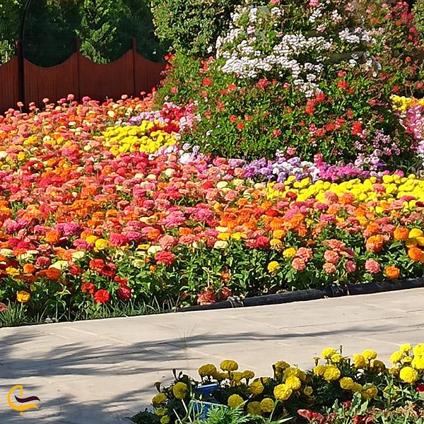 عکس انواع گل های باغ پروانه ترکیه