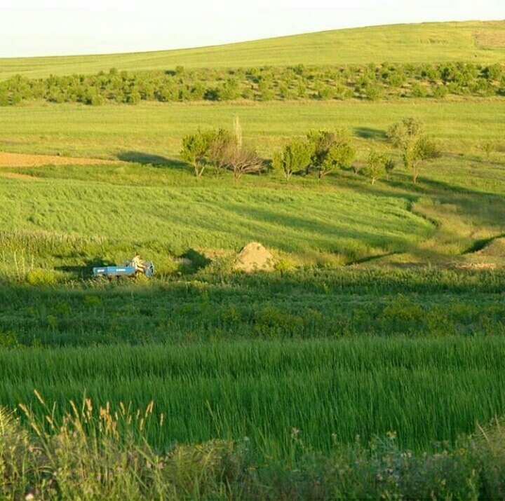 تصویری از تصویری از طبیعت سرسبز بیجار