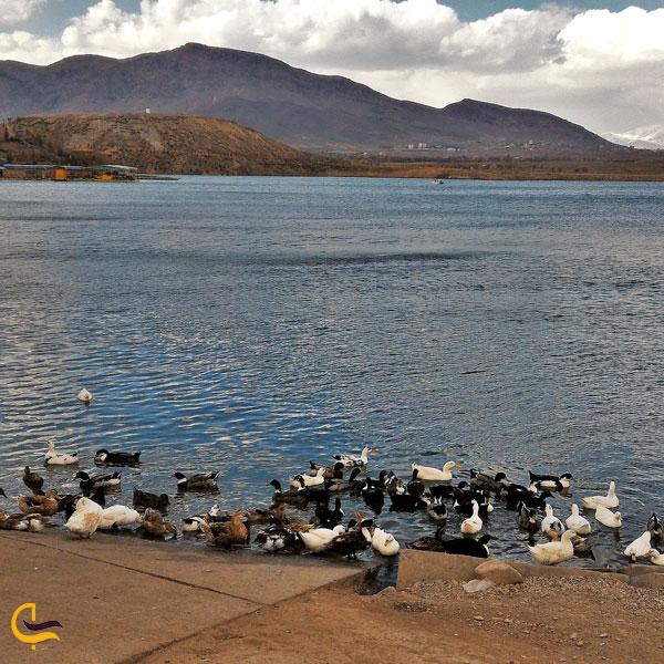 تصویری از دریاچه امند