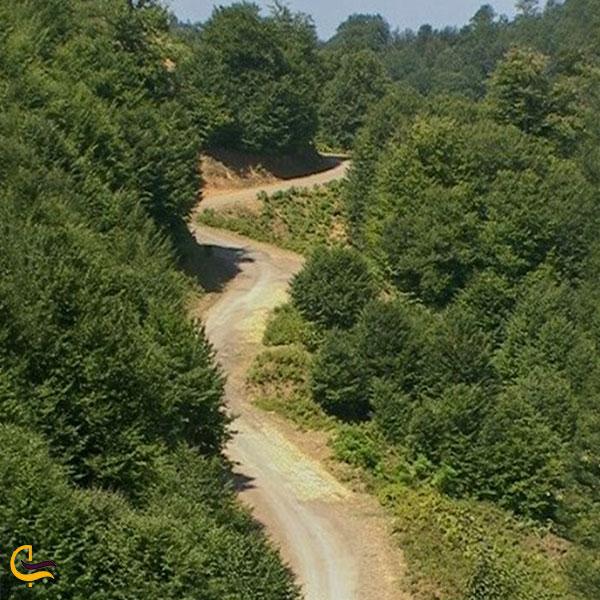 عکس پارک جنگلی عامری