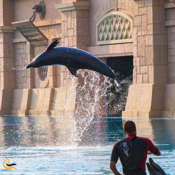 تصویری از برخورد با دلفین ها