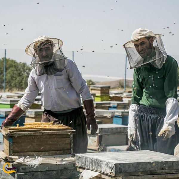 عکس زنبورداری در شبستر