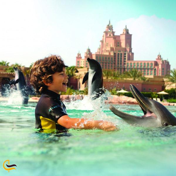 تصویری از عکس و بازی با دلفین ها در مجموعه دلفین بی