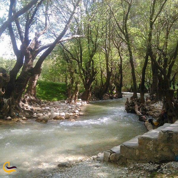 عکس پارک جنگلی پروز